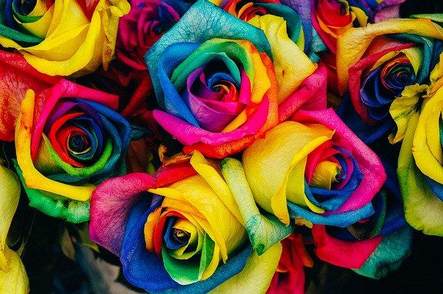 kytice duhových růží
